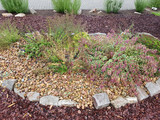 Krauterbeet, oregano, origanum, Kraeuter, Heilpflanze - 175029529