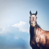 Beautiful black Horse with  white heart on forehead  at sky background - 175030369