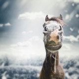 Funny horse face Muzzle  with nose at autumn overcast nature background with  clouds, wind, and rain - 175031547