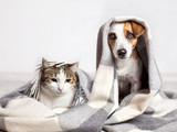 Fototapeta Dog and cat under a plaid