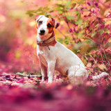 Dog at autumn - 175032389