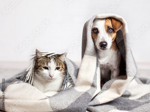 Dog and cat under a plaid Poster