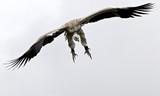 vautour - 175036317