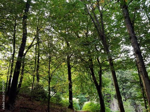 Aluminium Betoverde Bos Dichter grüner Laubwald am Philosophenweg in Oerlinghausen im Teutoburger Wald in Ostwestfalen-Lippe