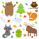 Forest animal insect set. Bear hare fox moose owl ladybug bee butterfly frog wolf fir tree leaf flower mushroom. Kids education cards. White background. Isolated. Flat design