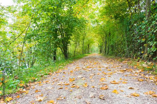Deurstickers Lime groen Idyllischer Waldweg im Herbst mit intensiven Farben