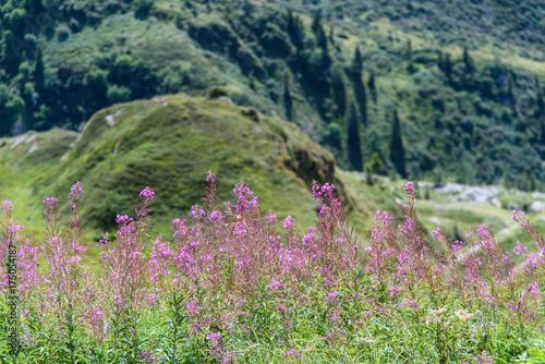 Spoed canvasdoek 2cm dik Olijf Alpine flowers