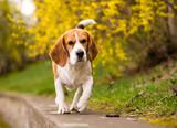 dog puppy animal running healthy