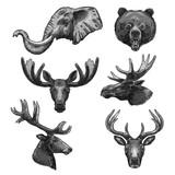 Vector sketch icons of wild animals heads - 175063730