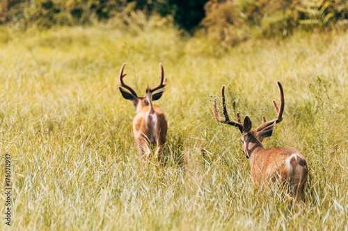 Fotobehang Hert wildlife deer
