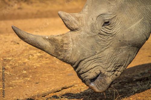 Aluminium Neushoorn White Rhino