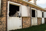 Beautiful white horse sticking head out of stable door. - 175080389