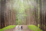 Photographer takes photos with a camera and tripod on a pine forest in the morning