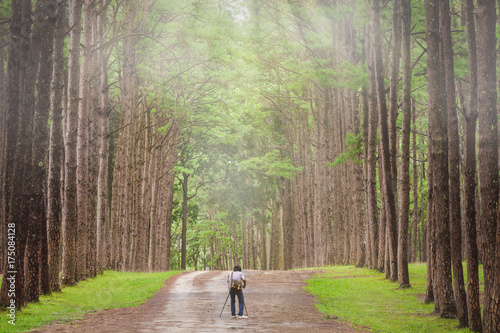 Fotobehang Zomer Photographer takes photos with a camera and tripod on a pine forest in the morning