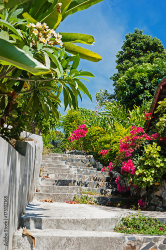 stone stairs in a tropical garden Poster