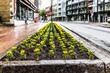 Saint Jean Baptiste Limoilou area with landscaped yellow marigold flower bed