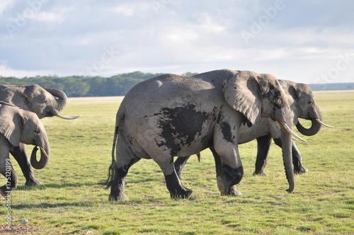 Fotobehang Neushoorn The African animals. Kenya