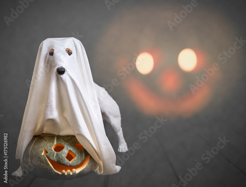 Poster Funny ghost and traditional Halloween pumpkin wtih scary face at background