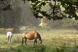 Cavalli al pascolo - 175128584