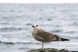 Gulls on the beach. - 175132746