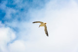 Seagull against the sky. - 175134358
