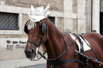 Horse in traditional white hat waiting for the tourists on street of Palermo, Sicily, Italy