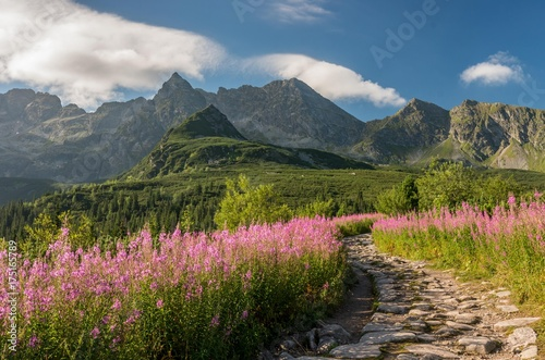 Fotobehang Blauwe jeans Tatra mountains, Poland landscape, colorful flowers in Gasienicowa valley (Hala Gasienicowa), summer tourist trail