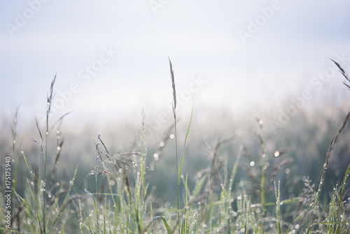 Foto op Canvas Gras Cereal growing on field