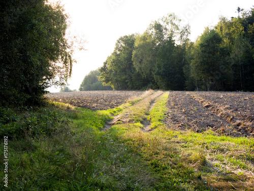 Keuken foto achterwand Weg in bos Polny krajobraz późnego lata