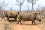 White rhinoceros in Hlane Royal National Park, Swaziland - 175190362