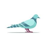 pigeon-flat-vector