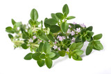 thyme with flowers - 175193134