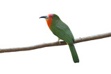Beautiful bird isolated on white background (Red-bearded Bee-Eater) - 175207983