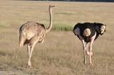 The African animals. Kenya - 175208157