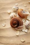 seashells and sand - 175212557