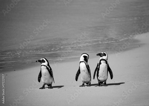 In de dag Antarctica Trio 2