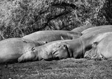Sleeping family - 175228517