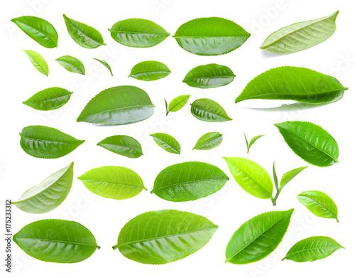 Fototapeta tea leaf isolated on white background