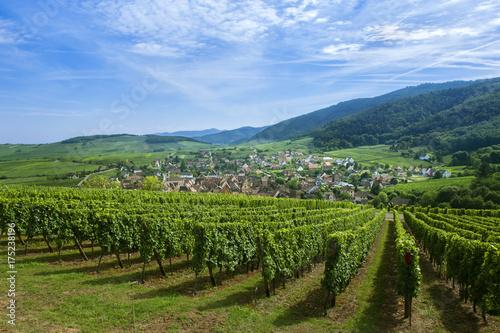 Aluminium Wijngaard Riquewihr en Alsace et son vignoble