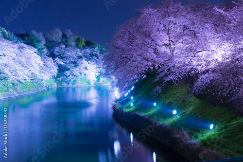 千鳥ヶ淵ライトアップ、春、桜まつり Poster