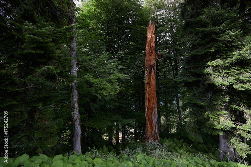 Fotobehang Zomer Early autumn mountain forest landscape. North Caucasus.