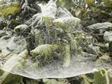 Spinnengewebe am Morgen, Altweibersommer - 175249710
