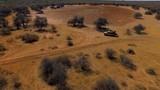 Safari on the SUV in the savannah. - 175264548