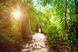 Jungle forest nature background - 175271935