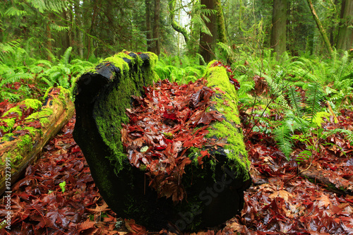 a picture of an pacific Northwest rainforest with a conifer log