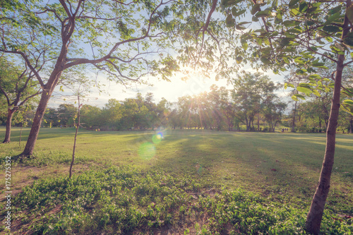 The perfect nature and sunset in park Poster