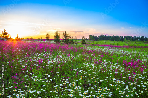 Fotobehang Zomer summer landscape with flowers on a meadow and sunset