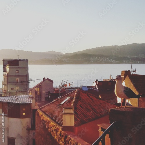 Rooftops sea and ocean view with seagull in vigo galicia spain