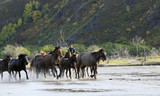 Many horses were running in the water - 175293519