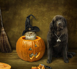 The cat in the witch hat is inside the pumpkin. A big dog is next to it. - 175307922